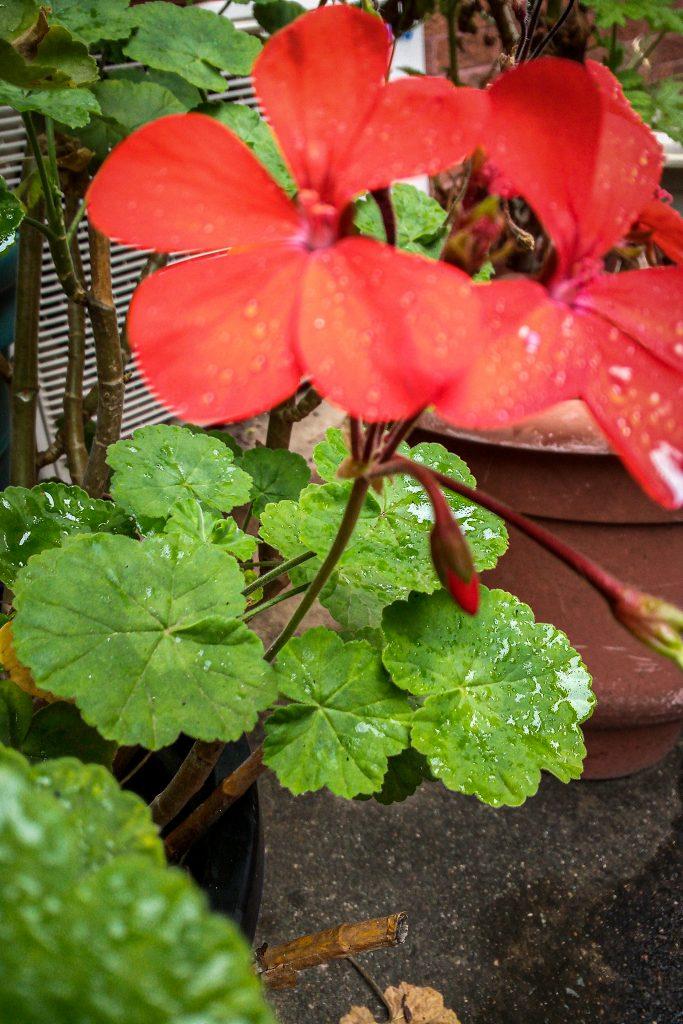 A Beautiful Flower by Nissin